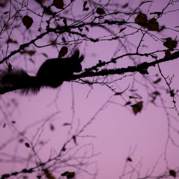 Chasing Purple Squirrels: Does Your Ideal Job Candidate Even Exist?
